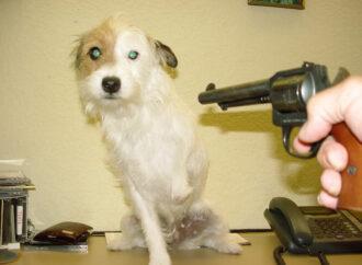 Мешала отдыхать: под Одессой дачник застрелил соседскую собаку