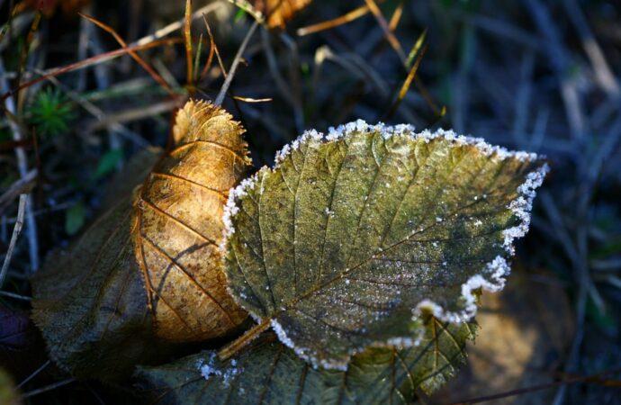Юг Украины накроют заморозки
