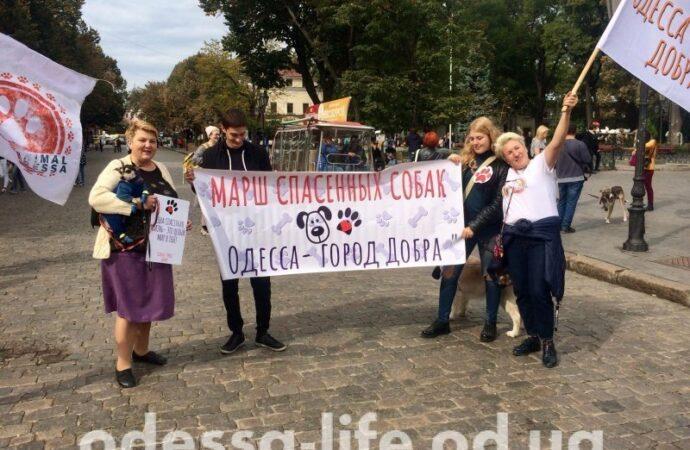 Одесса присоединится ко всеукраинскому маршу за права животных