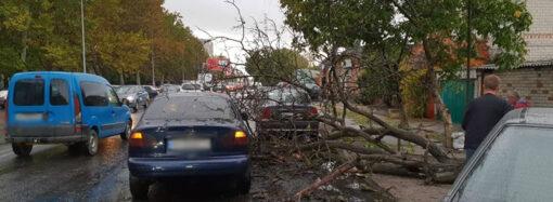 На одесских Черемушках часть дерева упала на дорогу