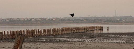 Расчистят реку и снесут дамбы: как экологи будут спасать одесский лиман