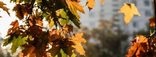 Погода на 10 жовтня. В Одесі прогнозують вітряну, але теплу погоду