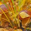 Погода на 12 жовтня. Синоптики прогнозують погожий осінній день в Одесі
