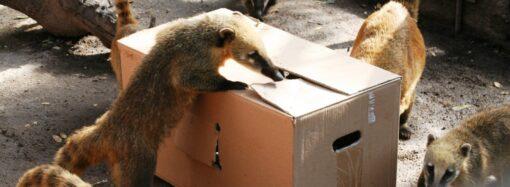 Ріккі, Пінкі та Абу: в Одеському зоопарку дали імена народженим цьогоріч звіряткам