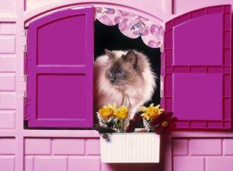 В Одессе креативные горожане продают кота с квартирой