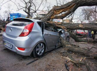 Одессит отсудил у мэрии 100 тысяч гривен за помятую деревом машину