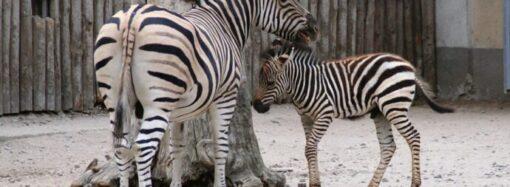 Одеський зоопарк презентуватиме імена маленьких звіряток