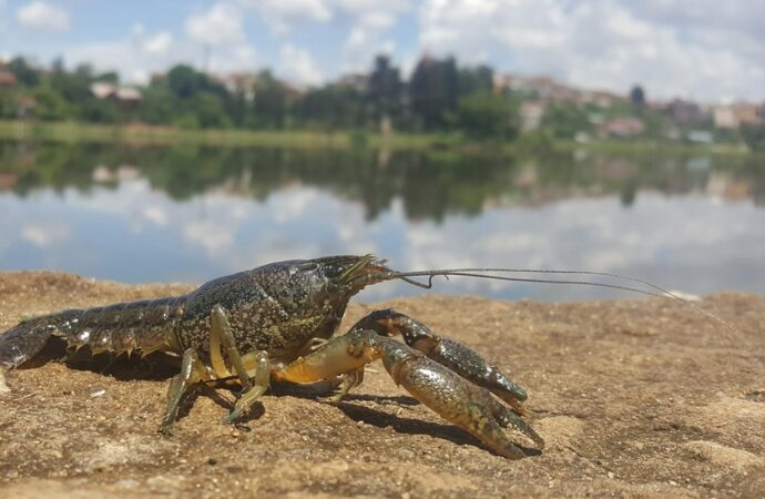 В Одесской области с 5 октября разрешили ловить раков