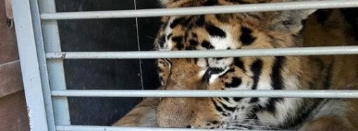 Одесский зоопарк обзавелся новым краснокнижным хищником