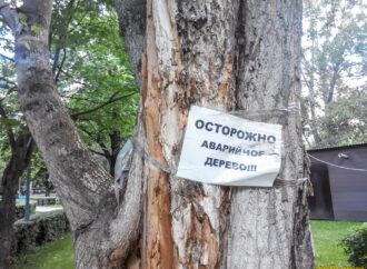 Куда обращаться одесситам, если надо спилить грозящее упасть дерево