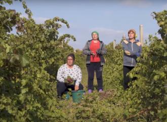 It's my life в полях и на заводе: как в Одесской области клип на популярный хит снимали (видео)
