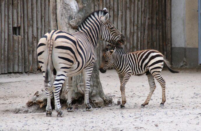 Дай имя малышу: одесский зоопарк просит подобрать имена зверятам и приглашает на праздник