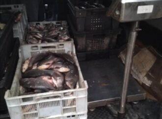 Браконьерский улов: на въезде в Рени остановили автомобиль с двумя центнерами рыбы