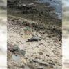 На море в Одессе заметили мертвого дельфиненка
