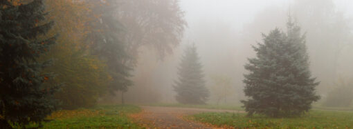 Одессу накрыл густой туман (видео)
