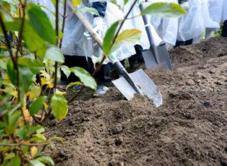 Висадять понад 300 дерев: в Одесі влаштують масовий суботник у декількох районах міста