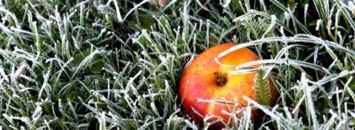 Предупреждение от ГС ЧС: ночью и утром в Одесской области ожидаются заморозки