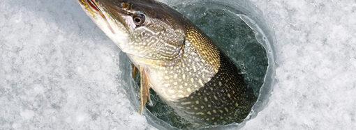 Не мешайте, рыба отдыхает: карта мест на одесских водоемах, где нельзя рыбачить зимой