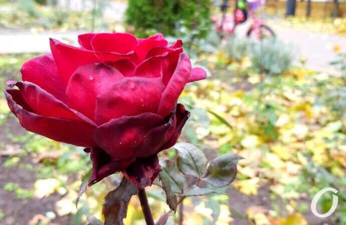 Теплая осень: как это отразится на садовых растениях?