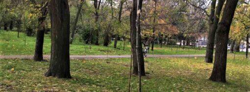Ламати – не саджати: в Одесі вандали зламали 15 саджанців нещодавно посаджених дерев