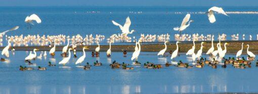 """У Нацпарку """"Тузлівські лимани"""" очікують на зимівлю качок, лебедів та орланів"""