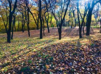 Погода на 21 листопада. В Одесі ймовірні сильні пориви вітру, уникайте аварійних дерев
