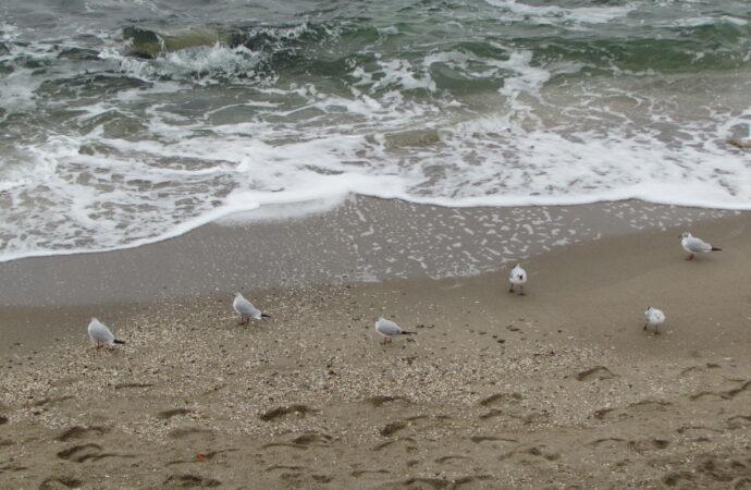 На берегу моря в Одесской области нашли труп женщины
