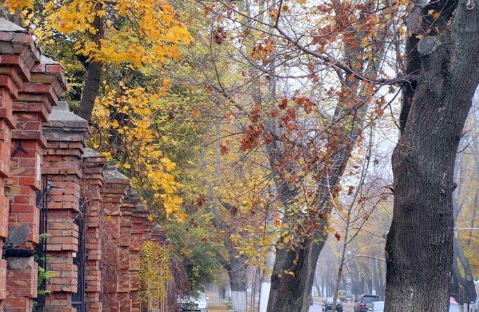 Здравствуй, дерево – прощай, дерево: что в Одессе происходит с озеленением?