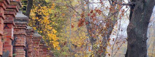 Здравствуй, дерево — прощай, дерево: что в Одессе происходит с озеленением?