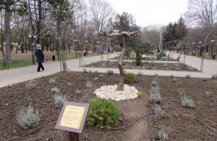 В одесском парке виноградной лозой подружили украинцев с грузинами (фото)