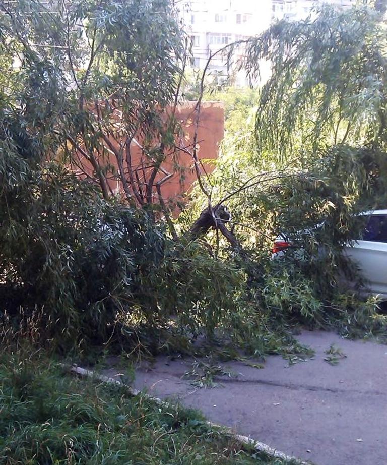 Это дерево на поселке Котовского в свое время рухнуло и повредило автомобиль