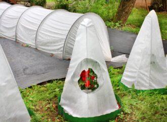 Советы садоводам: когда укрывать розы