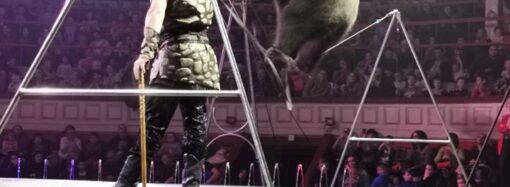 Что произошло в Одессе 20 ноября: поднятие тарифов на вывоз мусора и выступление медведей на арене цирка