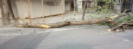 Будьте бдительны и не бросайте машины: в Одессе из-за сильного ветра падают деревья