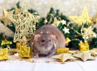 Mousefest: В Одесі створили конкурс для любителів творчості і тваринки-символа 2020 року