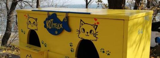 КОТтедж: в Одессе установили домик для зимовки котов
