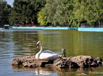Одесский парк Победы: лебеди переехали зимовать в зоопарк, а черепахи впали в спячку