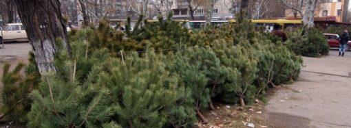 Что и почем: одесситам – о новогодних деревьях