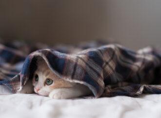 Погода на 23 листопада. Одесу огорнуть сильний вітер та морози