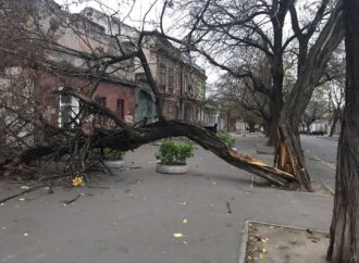Непогода: деревопад в Одессе продолжается