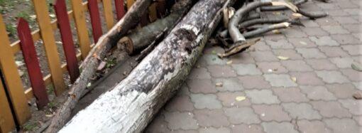 В Одессе выявили сотни аварийных деревьев: вместо них высадят новые