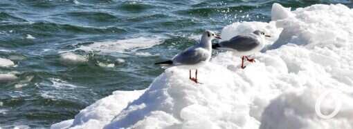 Какой будет погода зимой в Одессе: осенний декабрь, солнце на Новый год и снежный февраль
