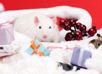 Знакомьтесь, Белая Крыса – красавица, умница, интеллектуалка: что мы знаем о символе грядущего года