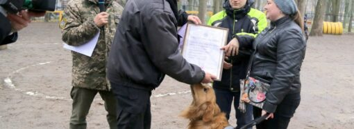 Кинологи в Одессе подарили незрячей горожанке собаку-поводыря (фото)