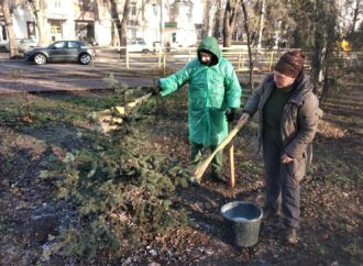 Система антивор: хвойные деревья в одесских парках и скверах приводят в «нетоварный вид» (фото)