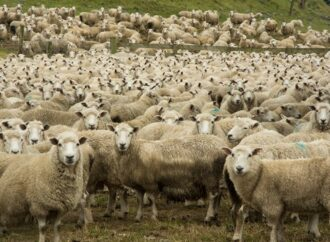 В нацпарке под Одессой овцы уничтожают уникальную экосистему