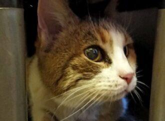 Інстинкт не підвів: на місці пожежі рятувальники знайшли живою трикольорову кішку Соню