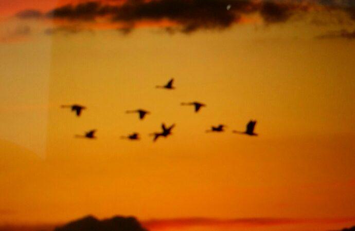 Эколог показал потрясающе красивый рассвет в «Тузловских лиманах» (видео)