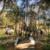 В центре Одессы появятся сад искушений и врата страстей (фото)