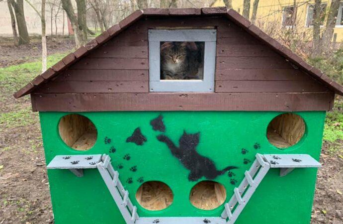 Одессит для бездомных кошек соорудил трехэтажный особняк с видом на море (фото)